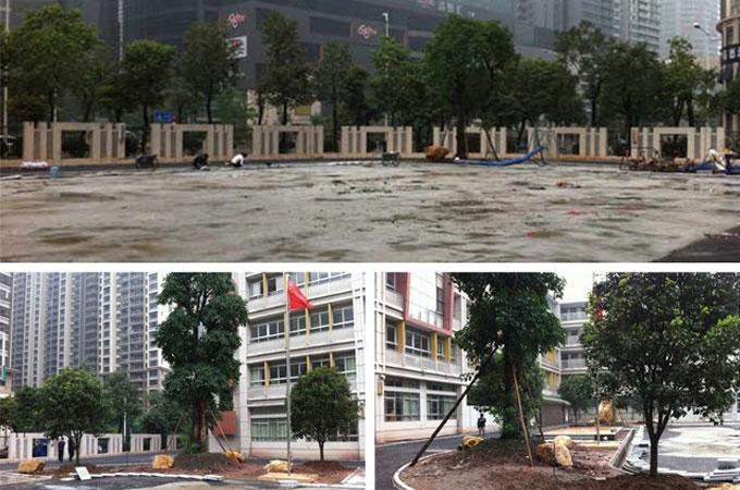 体育东小学绿化工程装修